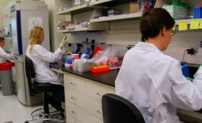Cancro, Cattel: sono deluso, mia ricerca bloccata per mancanza di fondi