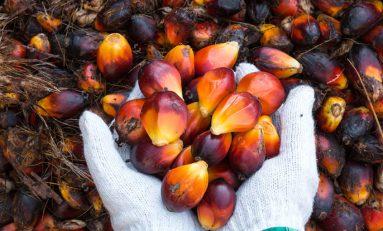 """Il """"maligno"""" olio di palma, da dicembre evitarlo sarà più facile"""