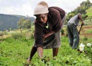 Sicurezza alimentare, solo il 20% delle donne nel mondo ha accesso alla terra