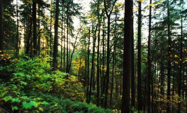 Cambiamento climatico, rimboschimento non è unica soluzione: spesso danneggia le specie protette