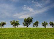 Ambiente, l'accordo globale sul clima spiegato ai bambini
