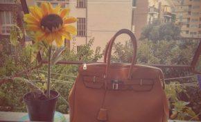 #VEGANAMANONTROPPO. Alla ricerca della borsa perduta