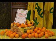 Dalle arance dei Piromalli all'olio di Messina Denaro: la mafia è servita