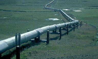 Gasdotto Tap, in Puglia sono 211 gli ulivi che alimentano la battaglia
