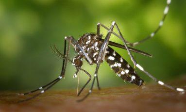 Chikungunya, l'esperto: non bisogna fare allarmismi