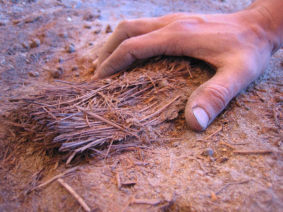 Nel Sahara preistorico coltivavano e mangiavano piante e cereali selvatici