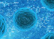 Cellule staminali, a che punto siamo?