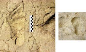 Sapienza: scoperte orme di bambino risalenti a 700 mila anni fa