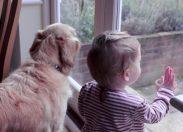 Minori crudeli verso gli animali: cosa nascondono questi atti?
