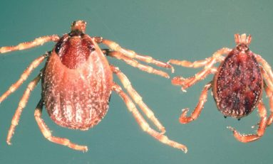 Encefalite da zecche e Sindrome di Lyme: é allarme in Italia