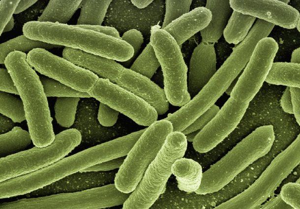 Allerta infezione: agente patogeno Candida Auris resiste agli antibiotici