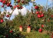 L'innovazione in agricoltura e i processi di creazione del valore