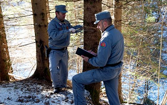 Comitato europeo: violati i diritti sociali del Corpo Forestale